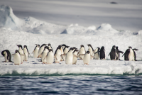 Penguins in Antarctica on board the Ponant Le Boreal